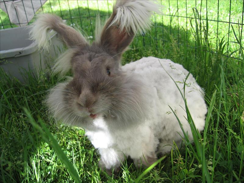 hur länge lever en kanin