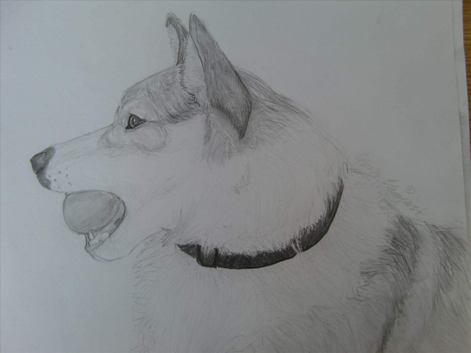 rita en hund