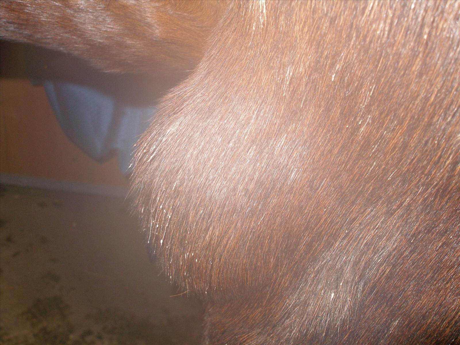 stor knöl i nacken på hund