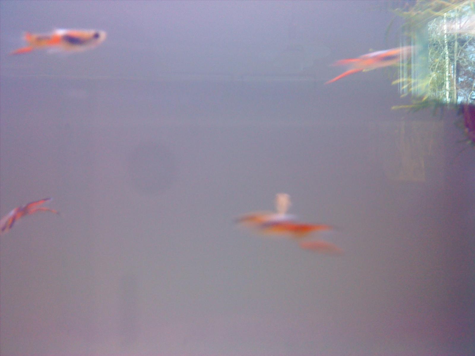akvariefisk yngel mat