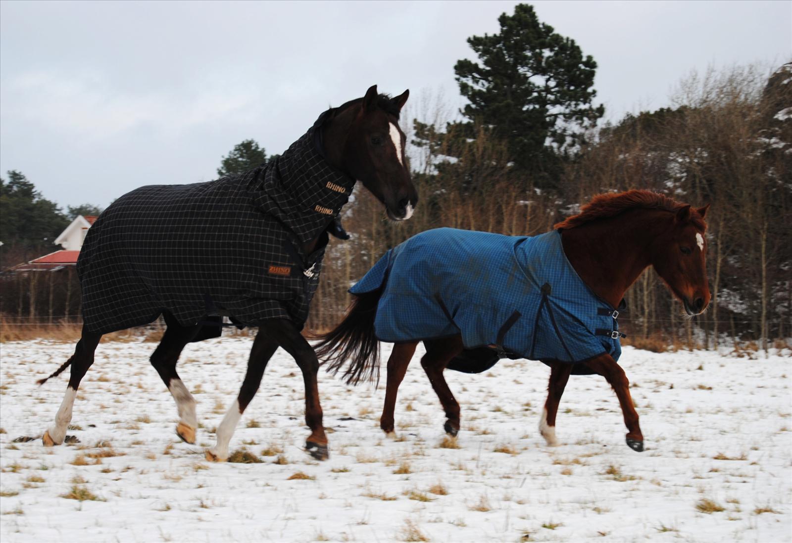 hur tjockt täcke häst