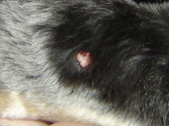 knöl i nacken på hund