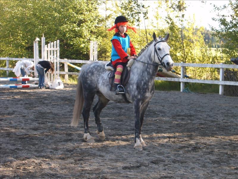 maskerad hoppning! - Övrigt om hästar - Ridsport iFokus 1756ed8c38d7a