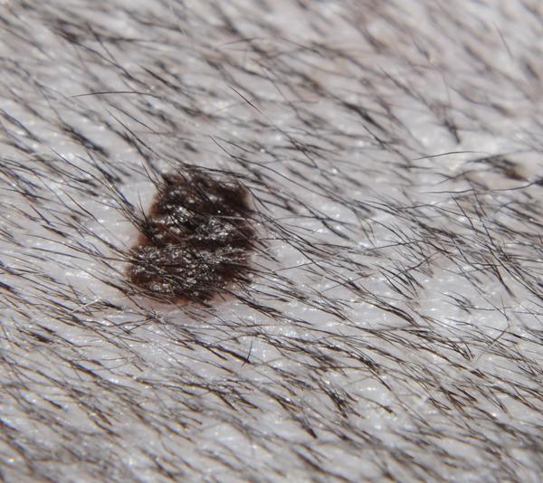 hudproblem hos katt