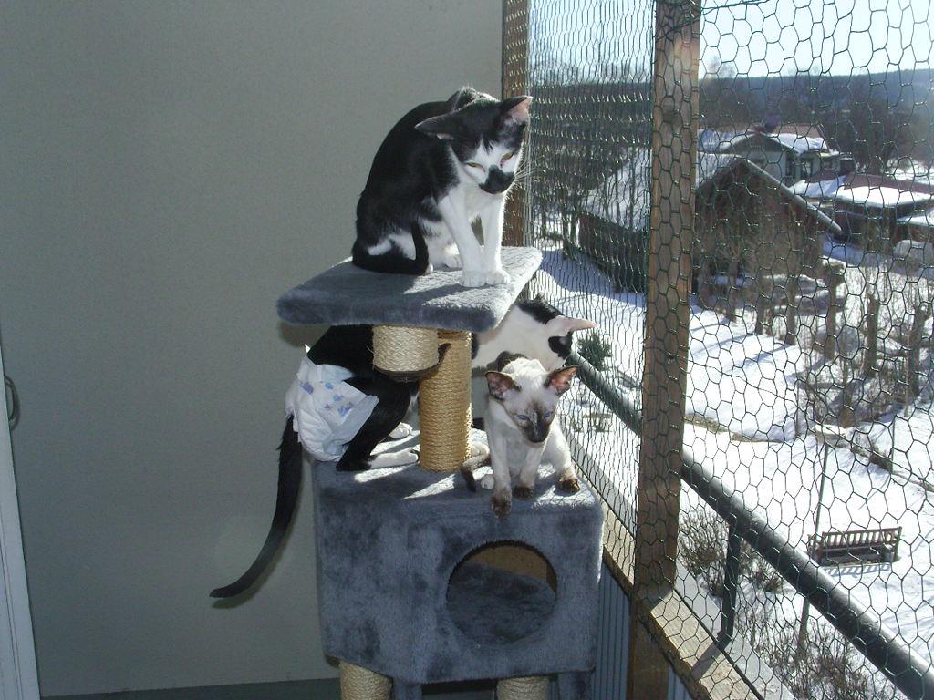 Nät balkong katt lag