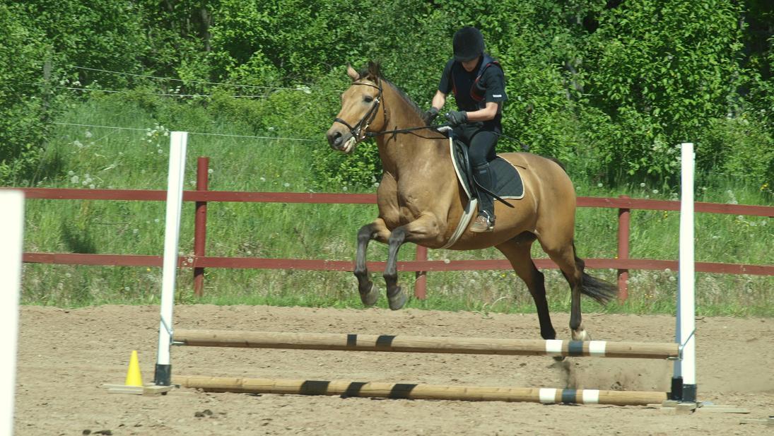 häst som hoppar jämfota