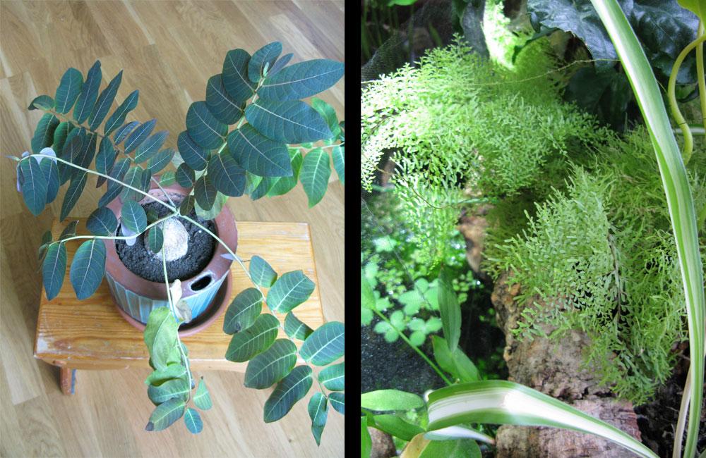 exotiska växter utomhus