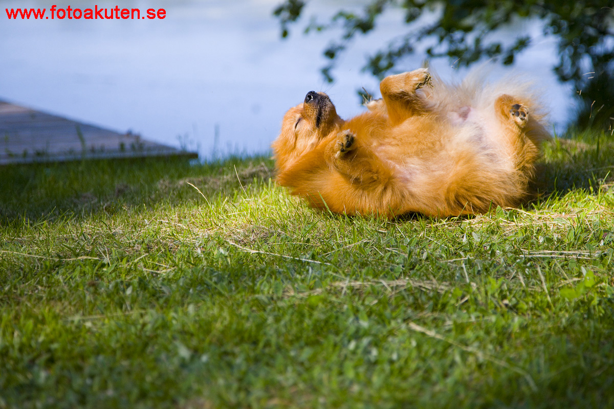 diarre hund