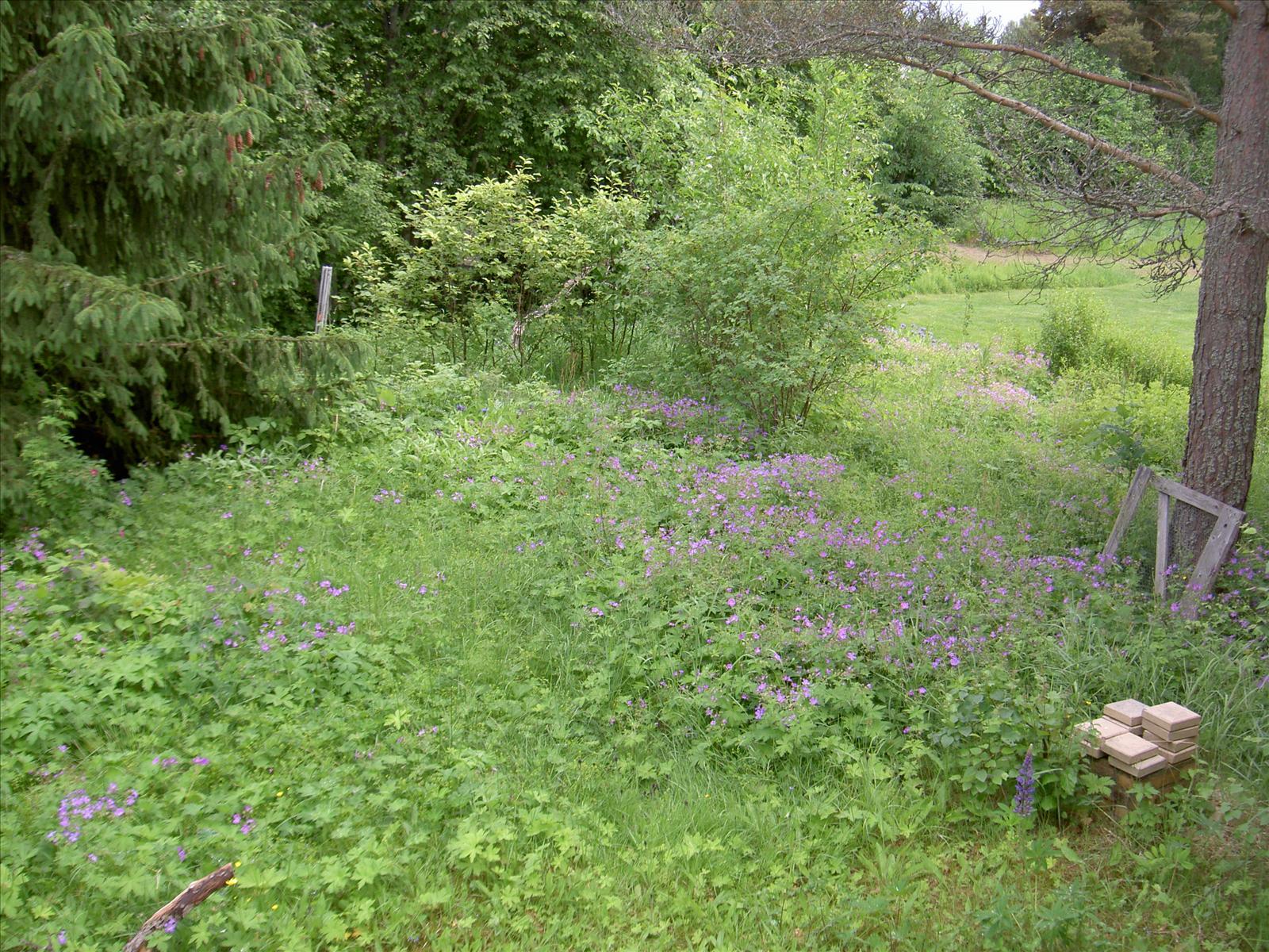 Vilda blommor   vilda växter och ogräs   trädgård ifokus