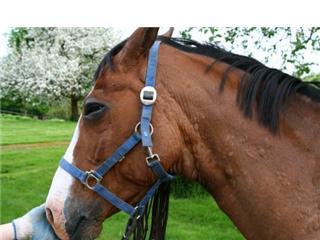 allergisk reaktion häst