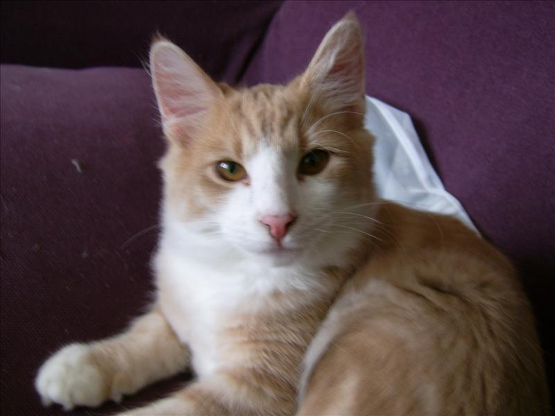 katt rinnande ögon brunt