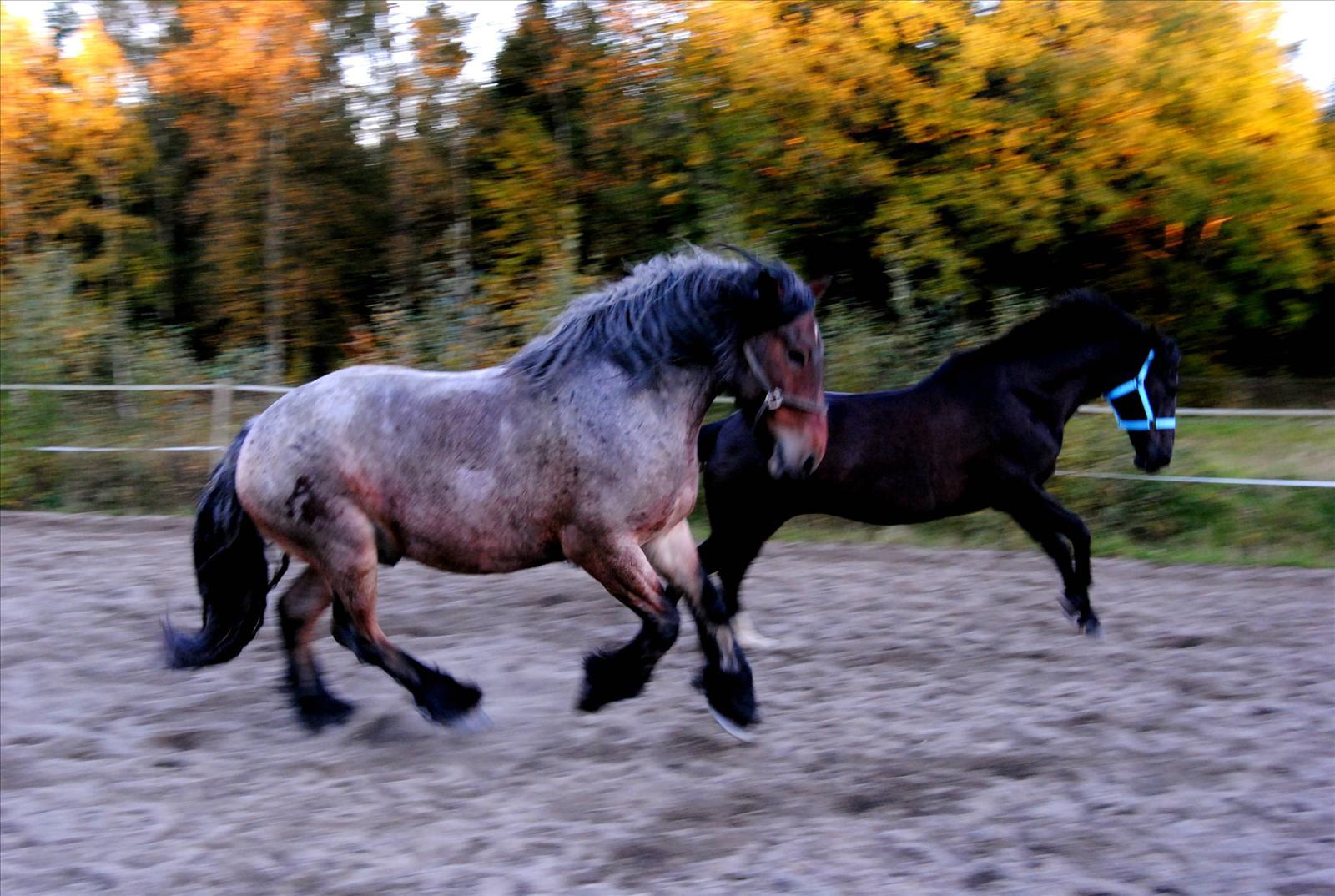 vetekli häst mängd