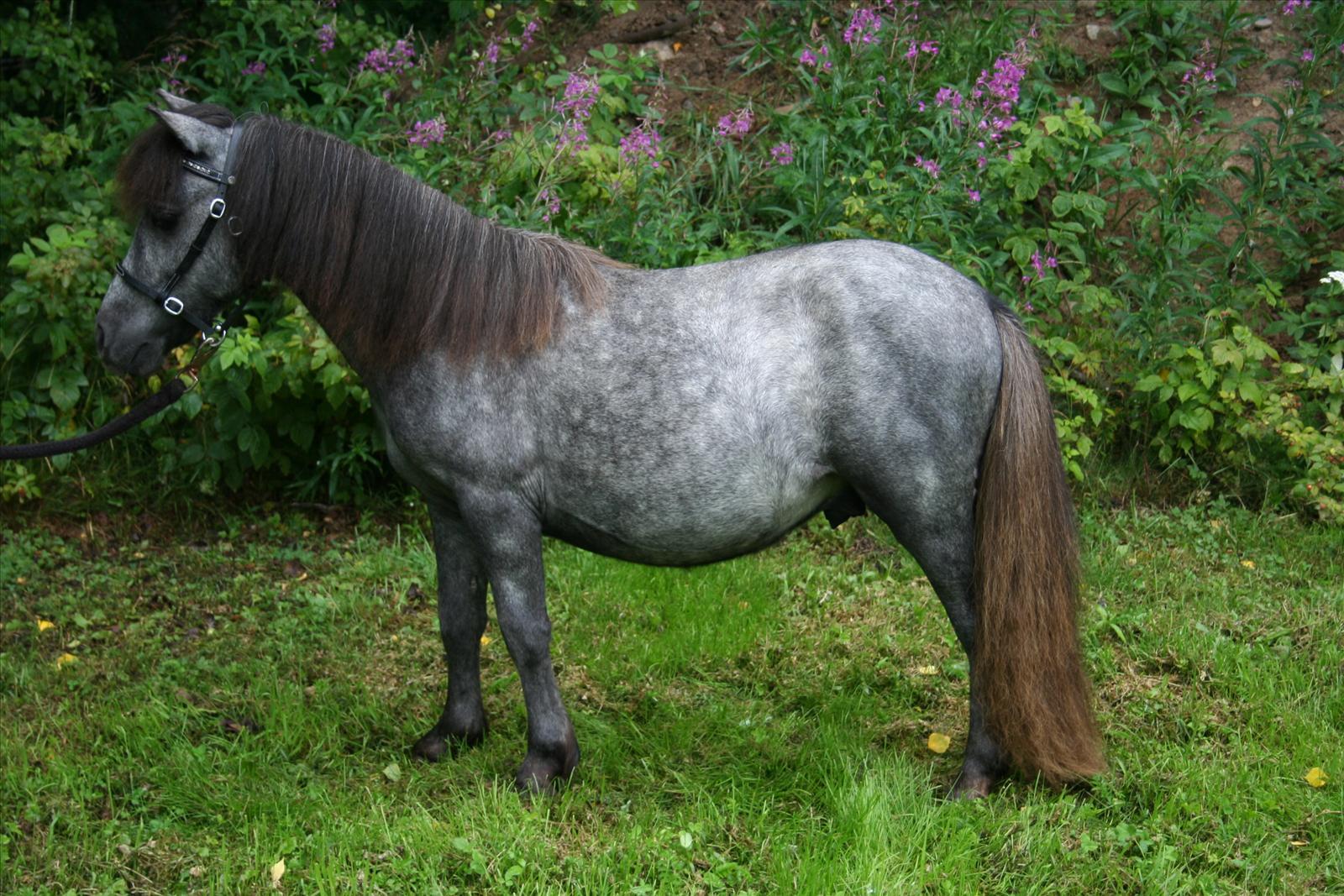 proteinbrist häst