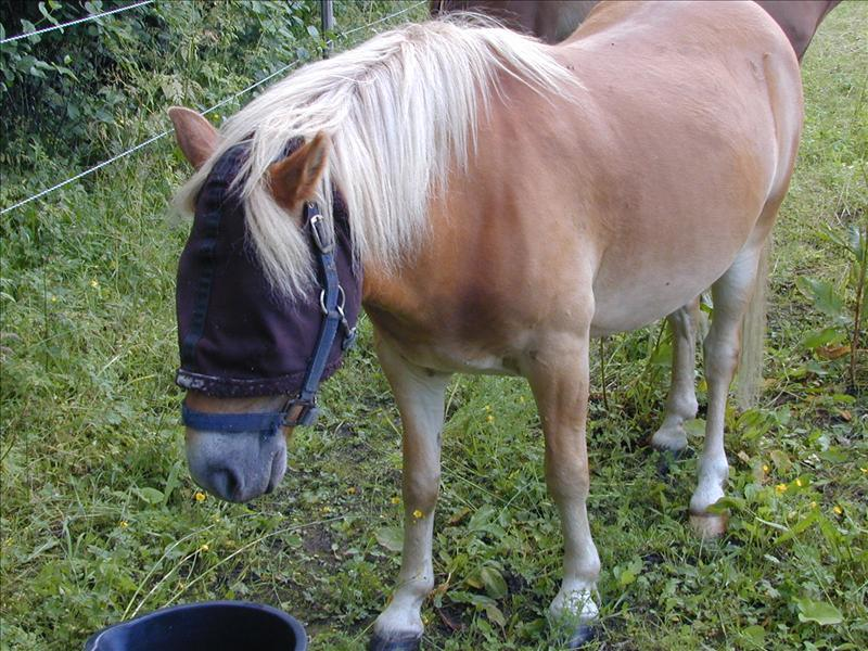 patellaupphakning häst träning