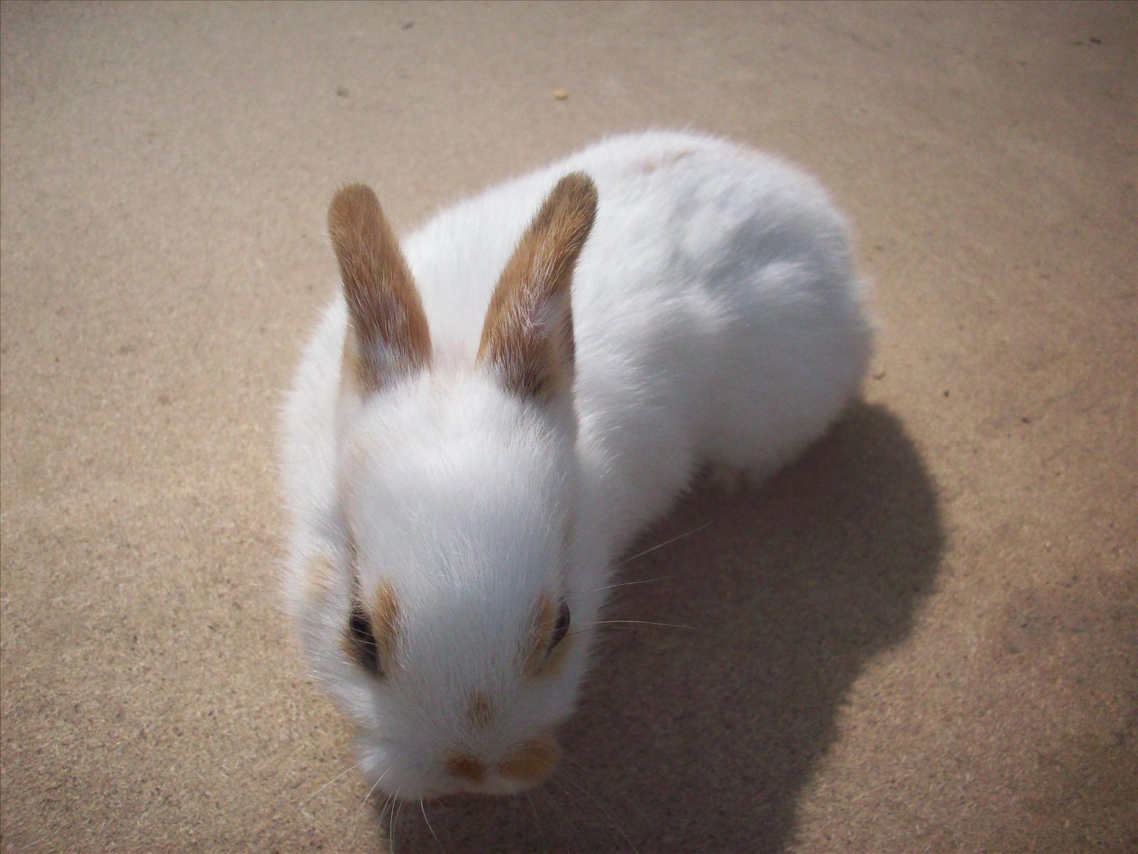 Söta kanin bebisar till salu Köpes, Säljes& Transport Kanin iFokus