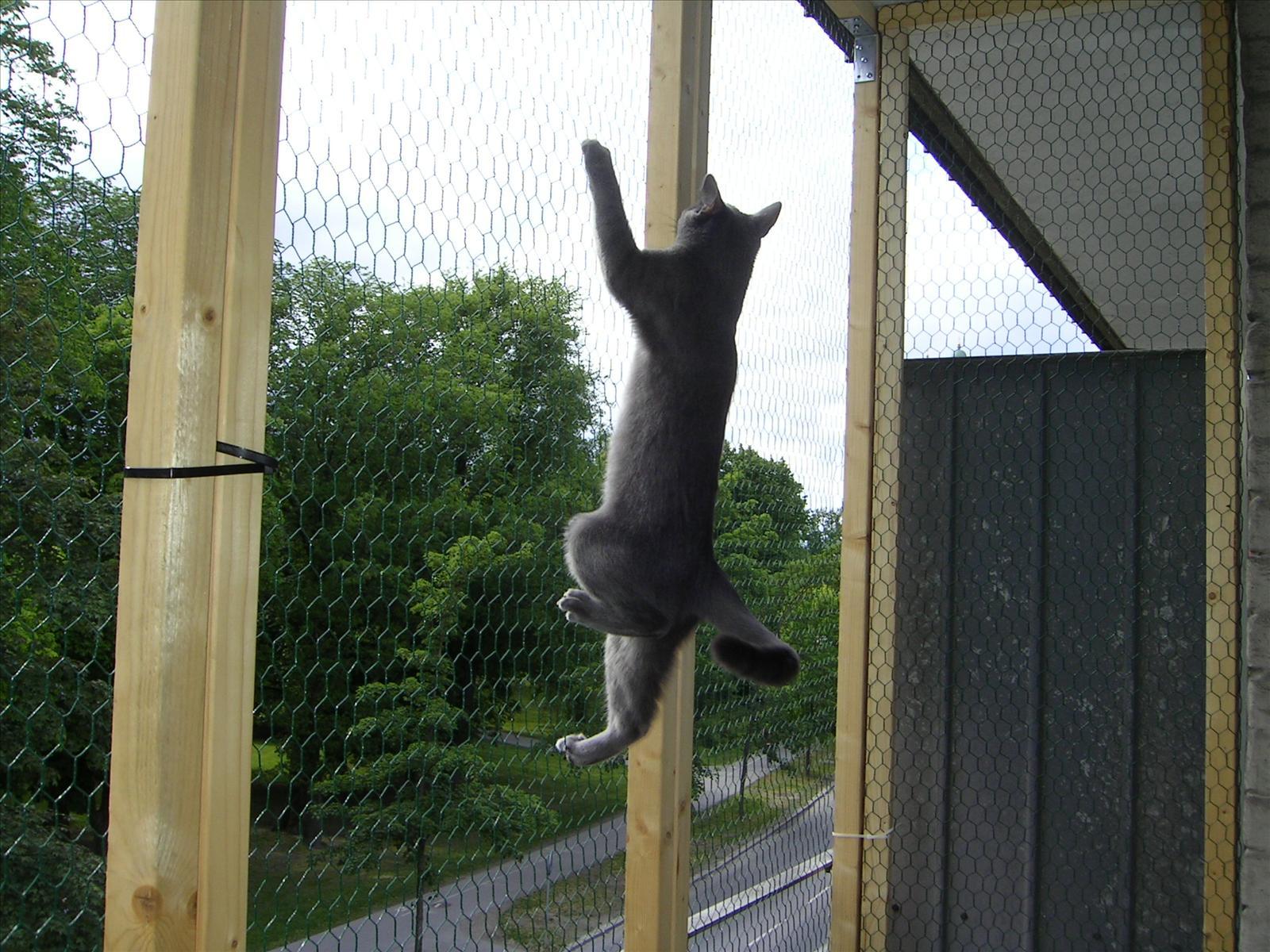 Katt balkong