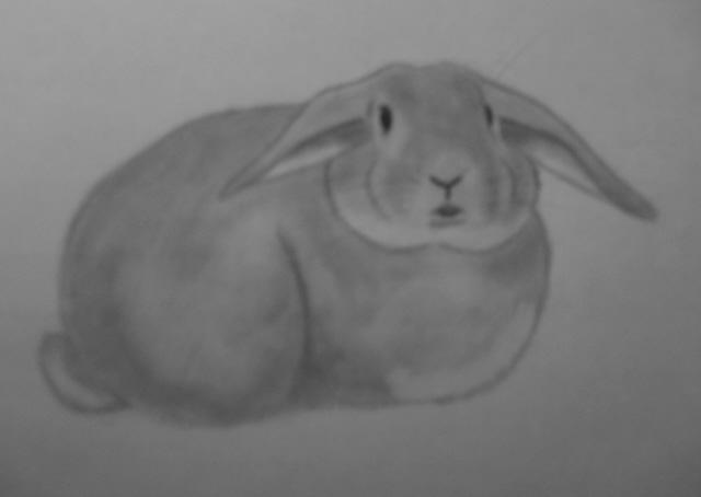 hur ritar man en kanin