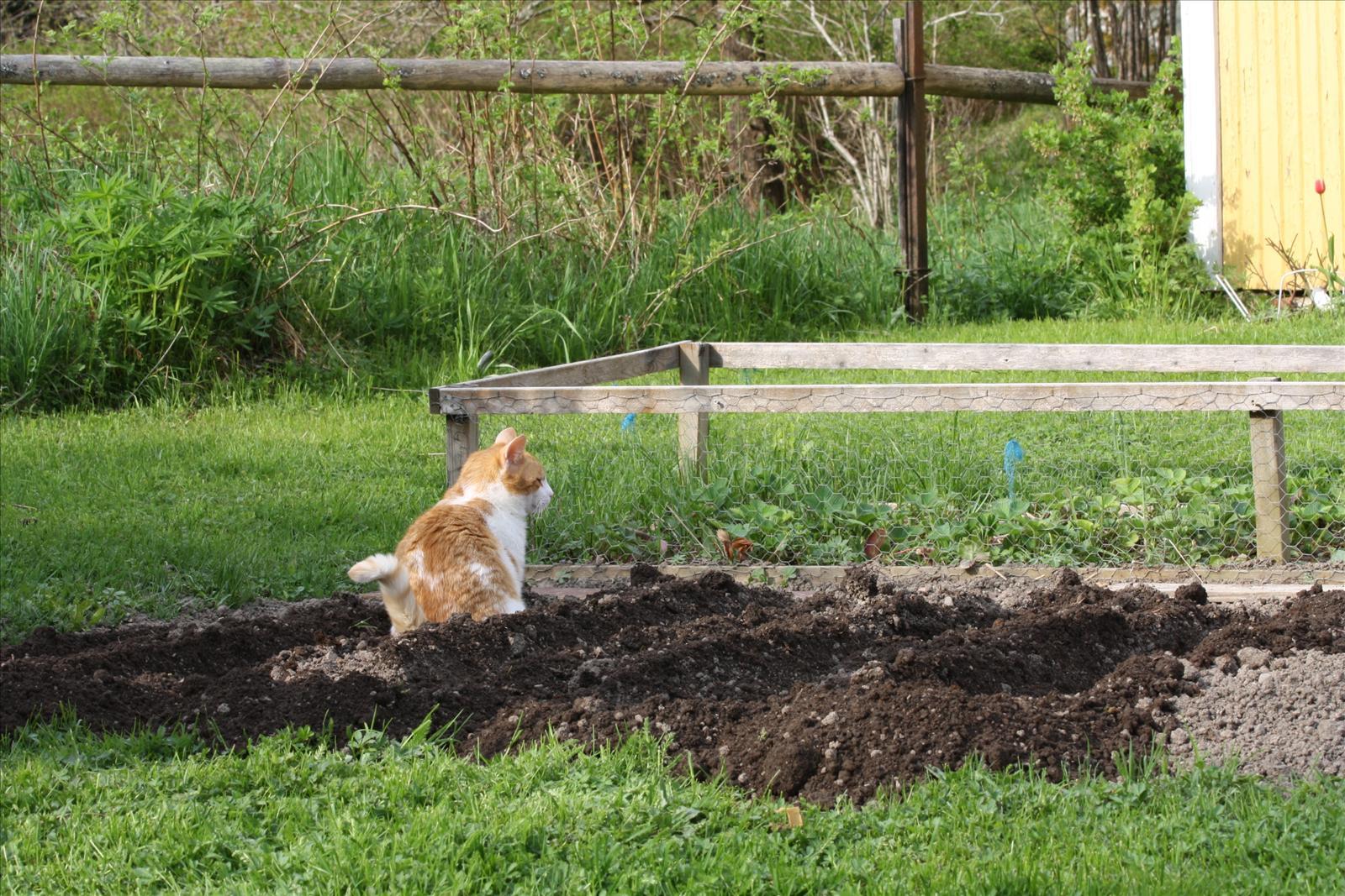 Trädgården - berätta! - Vår prunkande trädgård - Alt behandlingar ...