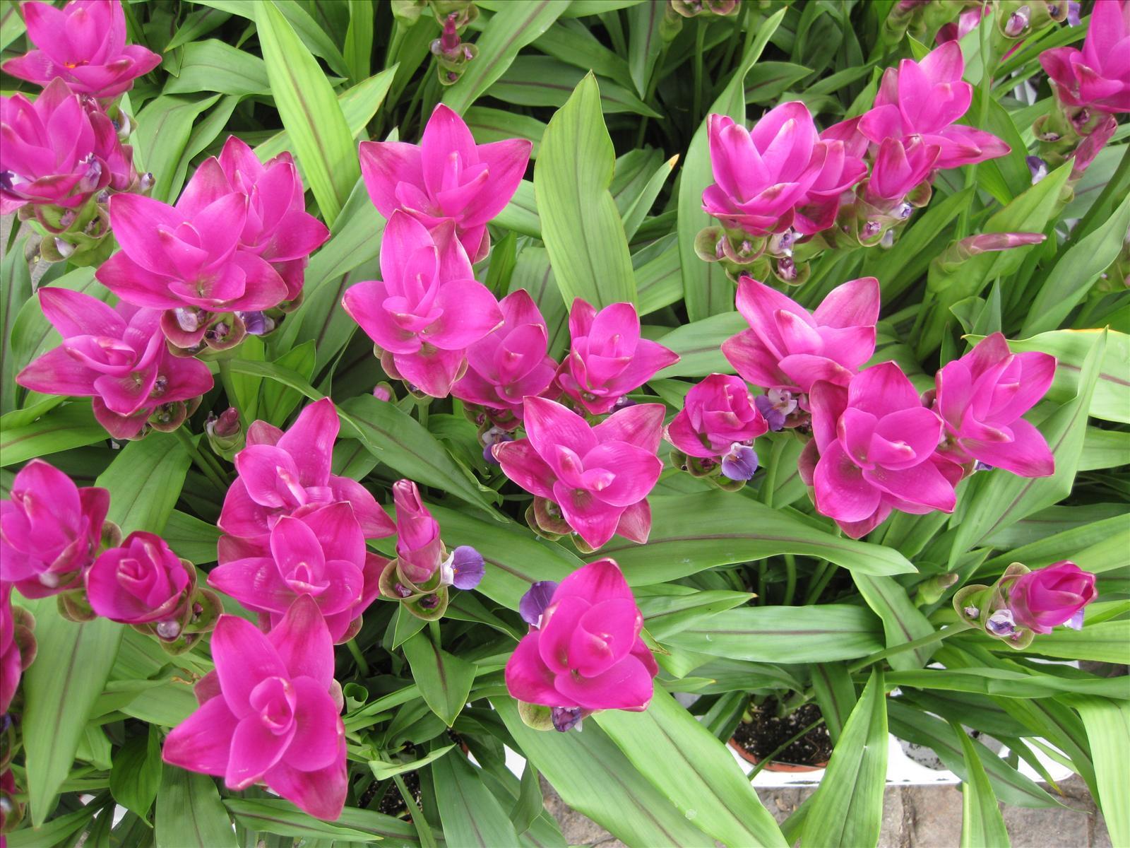 Växtens namn?   rabatter, perenner och annueller   trädgård ifokus